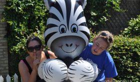 quiet zebra alert